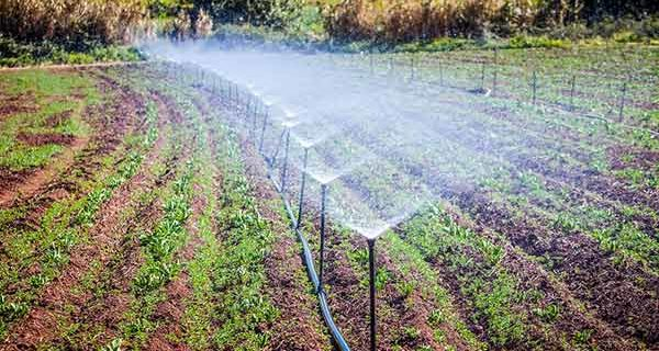 Tecniche in agricoltura tecnologia for Tecniche di irrigazione